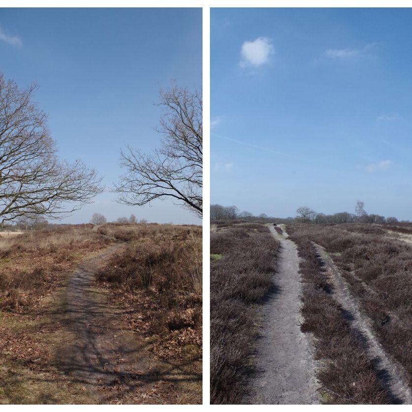 voetzoekers-gasterse-duinen-paden-in-het-gebied