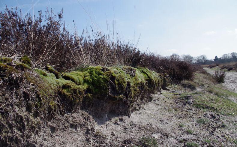 voetzoekers-gasterse-duinen-stuifzand-en-mos