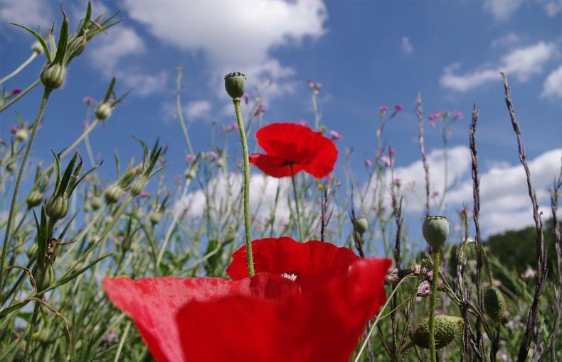 voetzoekers-beekdal-hondstong-bloemenweide