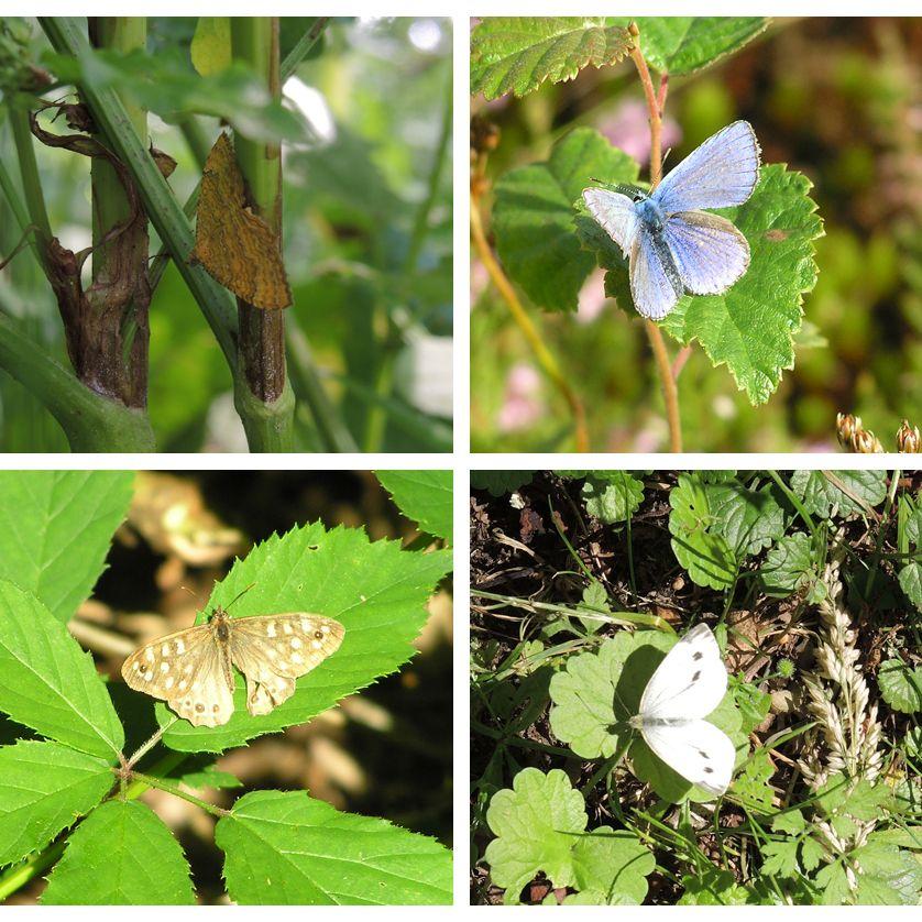 voetzoekers-beekdal-hondstong-bont-zandoogje-gestreepte-goudspanner-icarusblauwtje-klein-geaderd-witje