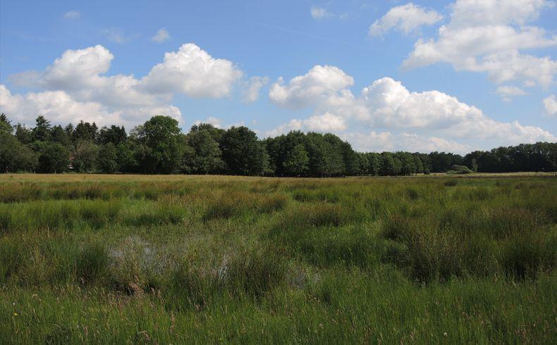 voetzoekers-beekdal-hondstong-grasland