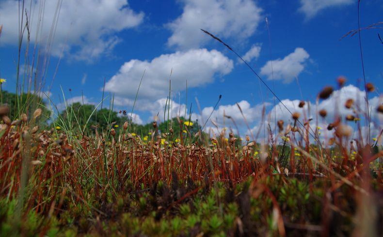 voetzoekers-beekdal-hondstong-mossen