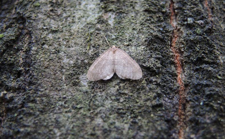 voetzoekers-het-drouwenerzand-kleine-wintervlinder