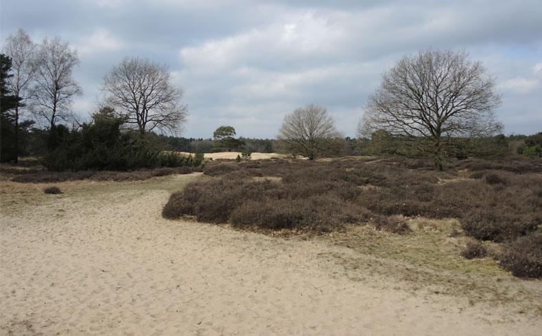 voetzoekers-het-drouwenerzand-zand-en-heide