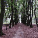 voetzoekers-krombeukenlaanroute