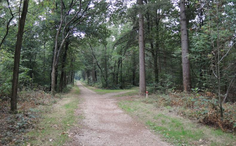 voetzoekers-krombeukenlaanroute-brede-paden