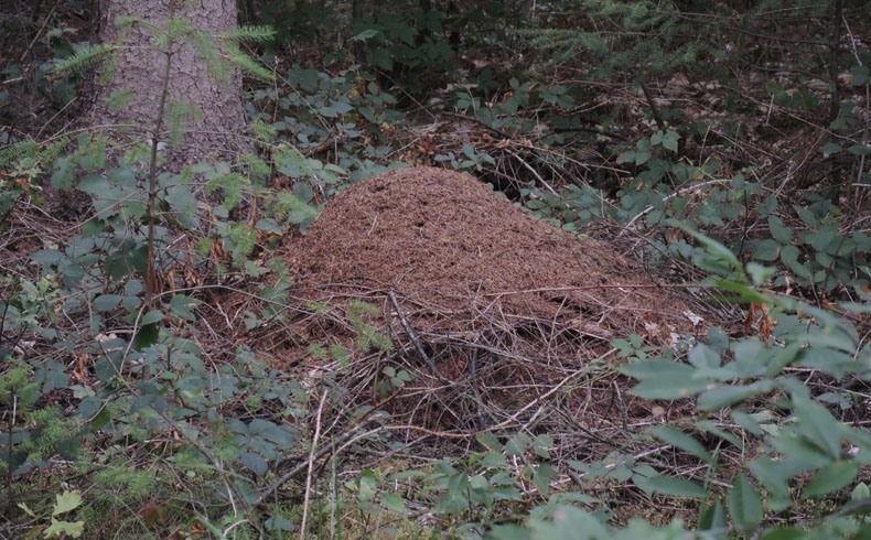 voetzoekers-krombeukenlaanroute-mierenhoop