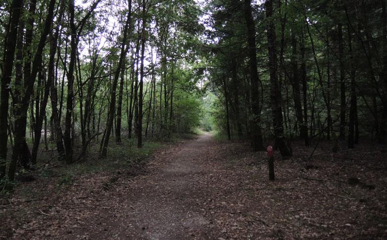 voetzoekers-krombeukenlaanroute-sfeervol-bos