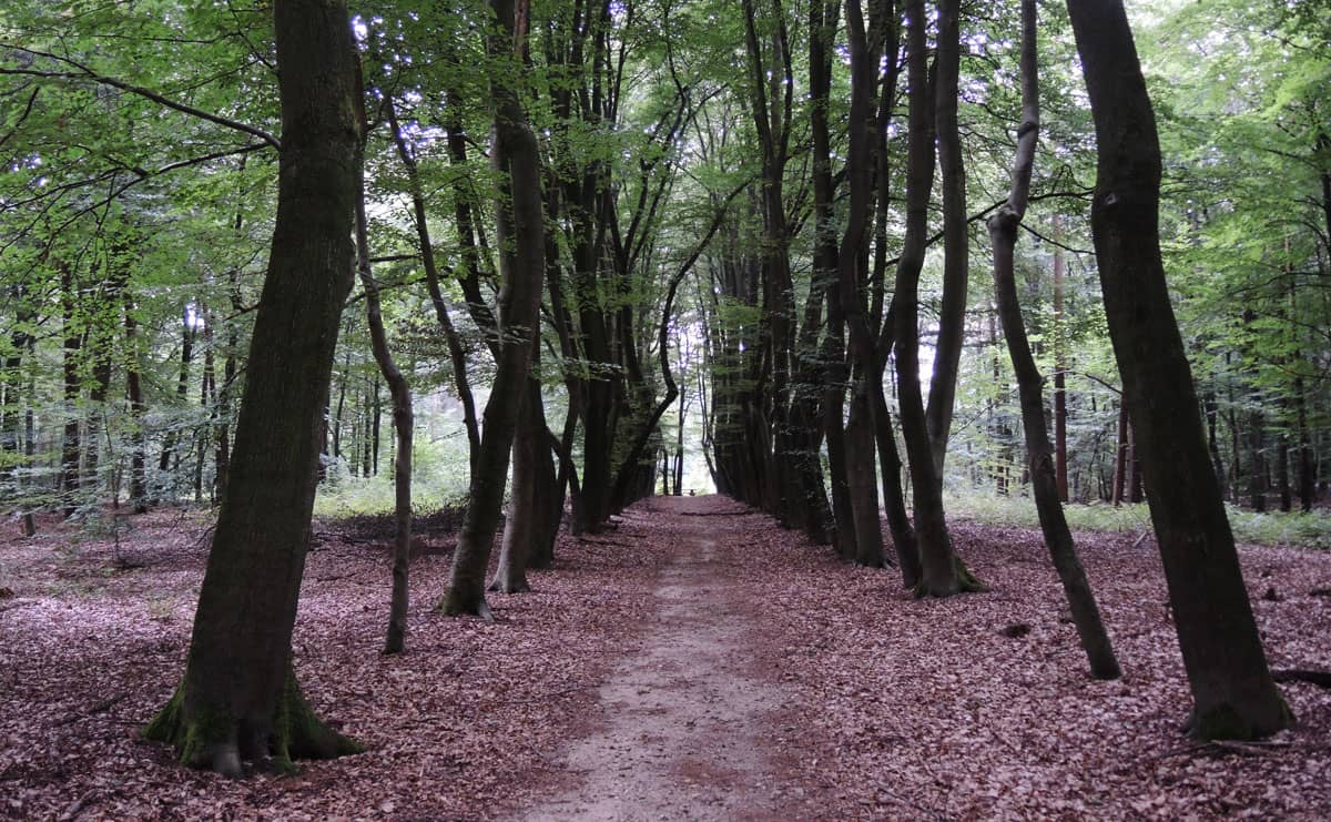3.5 km – Krombeukenlaanroute