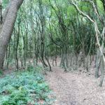 voetzoekers-theehuys-route